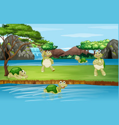 Scene with tortoise at park vector