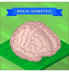 Lateral of human brain flat vector image