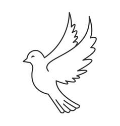 dove bird icon vector image