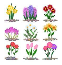Garden flowers plants on soil vector