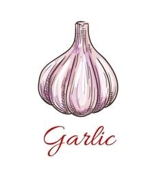 Garlic vegetable sketch icon vector