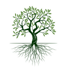 Green olive tree on white background vector
