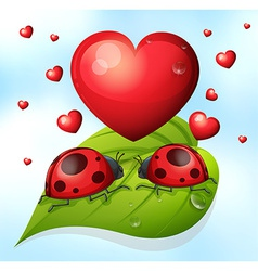Lady bugs and heart vector image