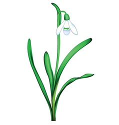 Plant with flower vector