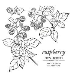 Raspberry set vector