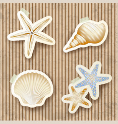 seashells on cardboard background vector image