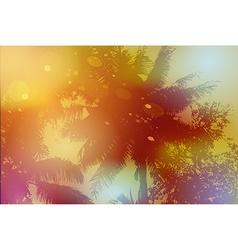 Sky palm trees sunset sun glare vector image