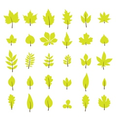 Set of autumn leaves Leaf collection in flat style vector image