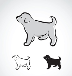 Dog labrador puppy vector image