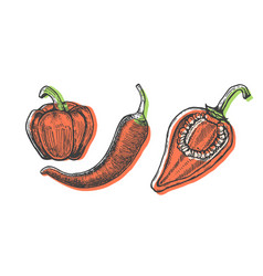 hand drawn of peppers set sketch style doodle vector image vector image