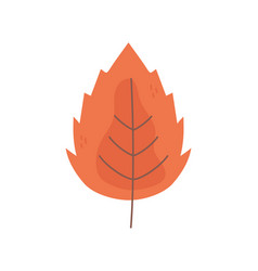 autumnal leaf foliage nature icon vector image