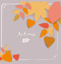 collection beautiful colour autumn leaves isolated vector image