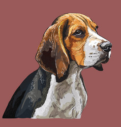 Colorful beagle hand drawing portrait vector