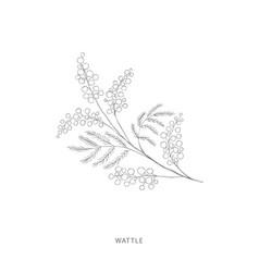 Hand drawn wattle flowerplant design elements vector
