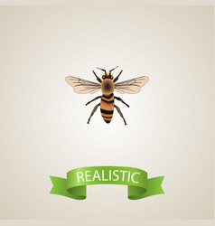 Realistic housefly element of vector