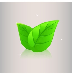 Two leaves vector image