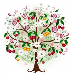 cherry tree vector image