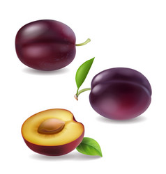 realistic plum collection plums 3d vector image