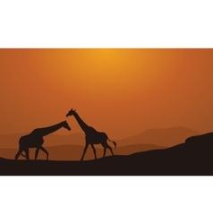 Silhouette Giraffe On Sunset Background vector image