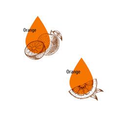 Orange peel oil icon set hand drawn sketch vector