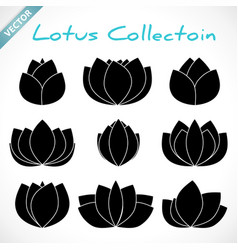 set black lotus silhouette with white outline vector image