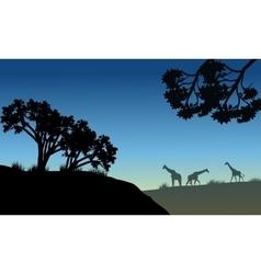 Silhouette of tree and giraffe vector