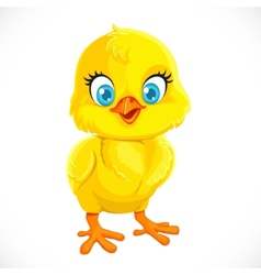 Cute yellow cartoon baby chicken vector image