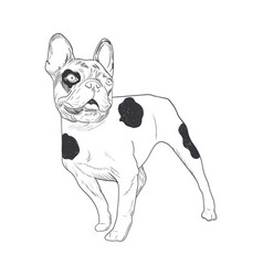 French bulldog hand drawn sketch isolated on vector