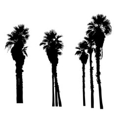 silhouette of palm trees isolated on white vector image
