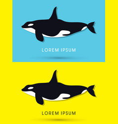 killer whale swimming vector image