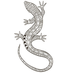 lizard coloring for adults vector image
