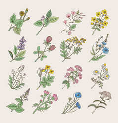 Botanical herbs and flowers hand drawing pictures vector
