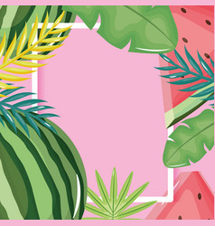Fresh watermelon and leafs palms square frame vector