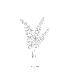 Hand drawn heather flowerplant design elements vector