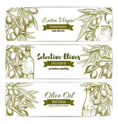 olive oil sketch banner set with fruit and bottle vector image