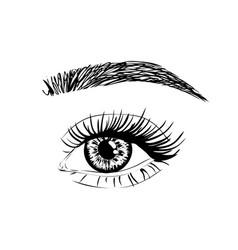 Open eye with long eyelash for vector