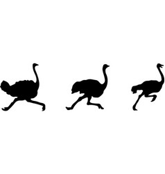 Ostrich icon isolated on background vector