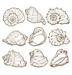 Hand drawing seashell set vector image vector image