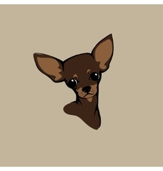 Chihuahua dog - vector image