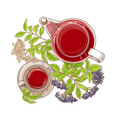 elderberry tea vector image