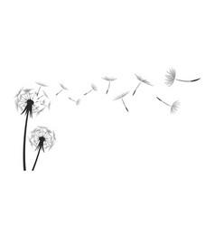 Flower field dandelion vector