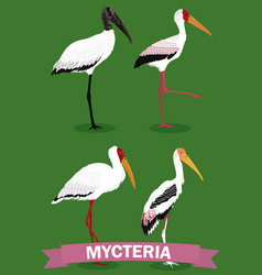 Mycteria stork genus cartoon bird vector