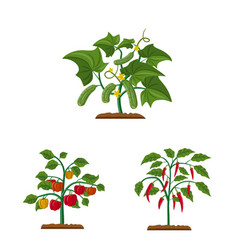 greenhouse and plant sign vector image