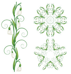 White snowdrop flowers vector