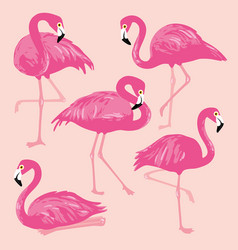 set with pink flamingos hand drawn vector image