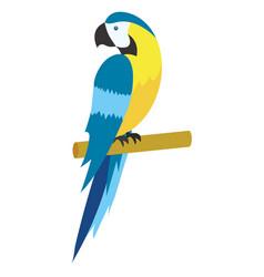 cute tropical parrot cartoon vector image