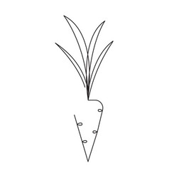carrot editable continuous line vector image