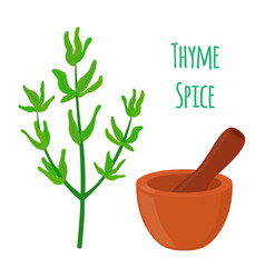 thyme spice mortar pestle cartoon style vector image