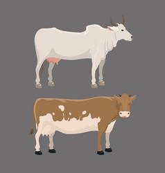 bull and cow farm animal vector image