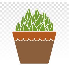 Haworthia cooperi decorative plant flat colour vector